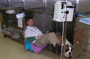 Dr. Moore - Willow Brook Animal Hospital