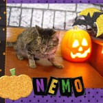 Nemo Trepanier - Willow Brook Animal Hospital