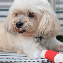 Pet Surgery - Willow Brook Animal Hospital