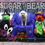 Sugar Bear Foster - Willow Brook Animal Hospital